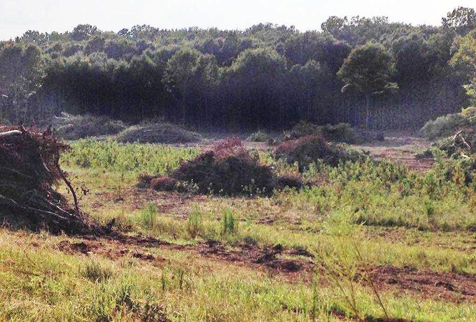 clear cutting land
