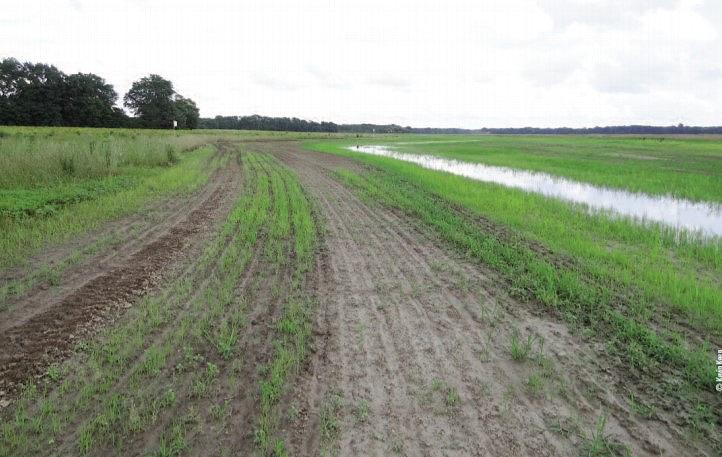moist soil