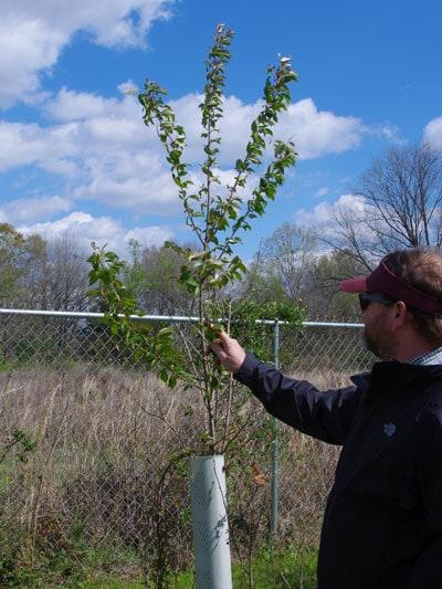 tree with tree tube