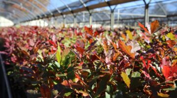 Your Guide to Fall Tree Planting